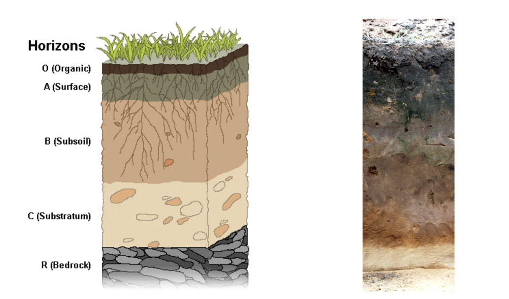 Striated layers of soil, known as soil horizons, vary in physical and chemical environments. Different layers sustain unique varieties of microbial life. A schematic is shown on the left and a representative photo on the right.