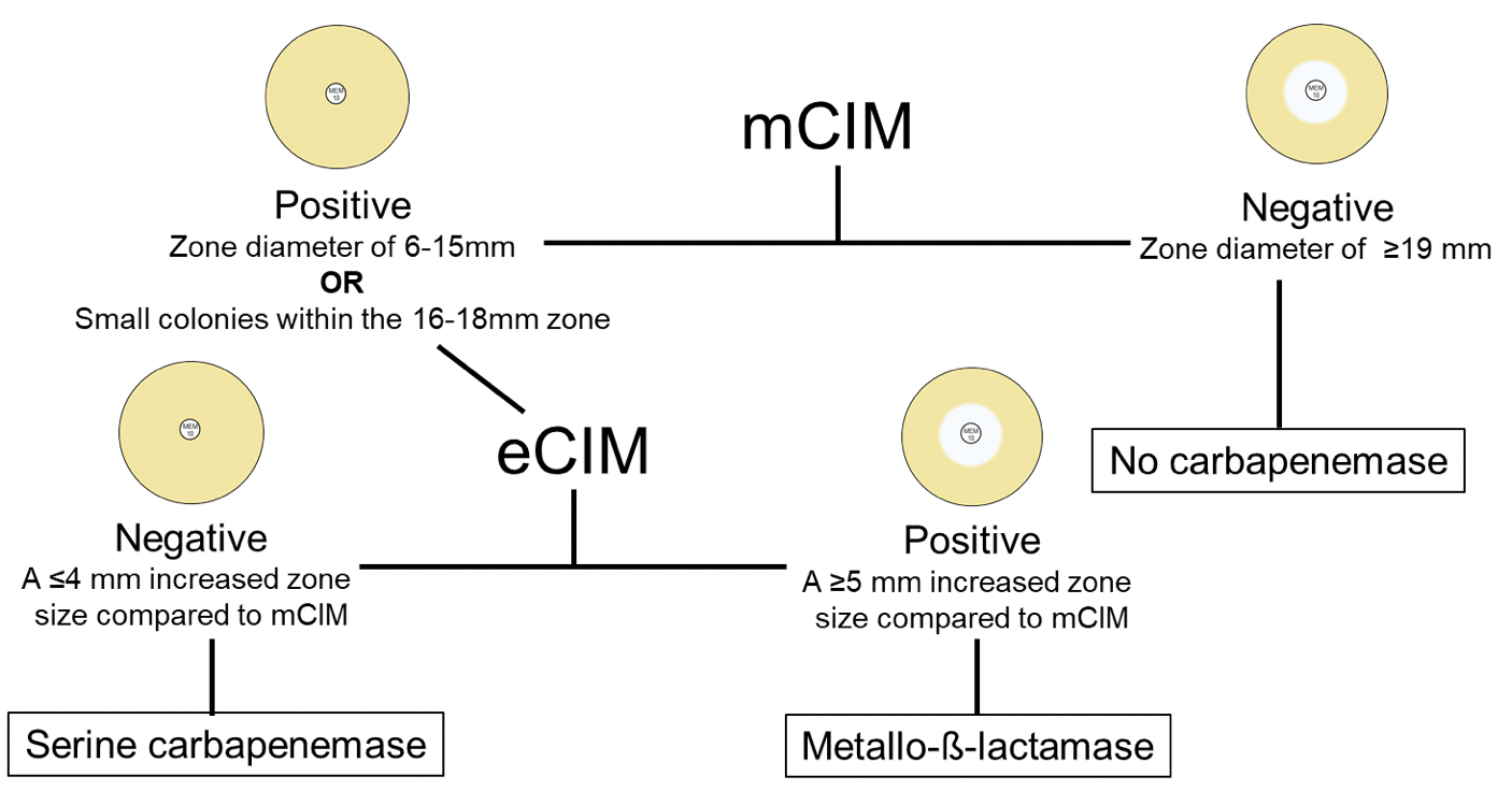 Figure 4. The mCIM and eCIM flowchart.  Simplified flowchart for eCIM and mCIM interpretations. Indeterminate results are omitted for simplicity. Figure K.P. Smith.