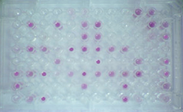 Utilization of 95 different carbon sources are tested on this plate. If the bacteria can oxidize a specific carbon source, a purple color develops.
