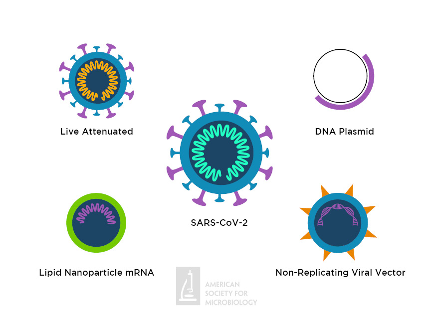 Graphical representation of a SARS-CoV-2 viral particle and the 4 types of vaccine candidates in clinical trials as of May 2020.