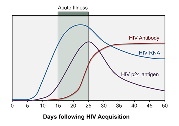 Acute HIV infection is the initial phase which occurs immediately after HIV acquisition. It is characterized by rapidly increasing HIV RNA and HIV p24 antigen levels while anti-HIV antibodies remain undetectable.