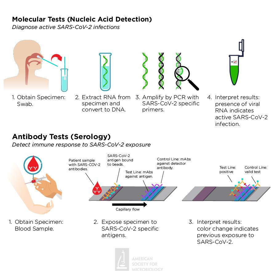 Comparison of COVID testing