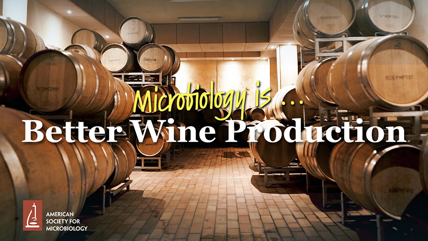 Microbiology Is ... Better Wine Production | ASM.org