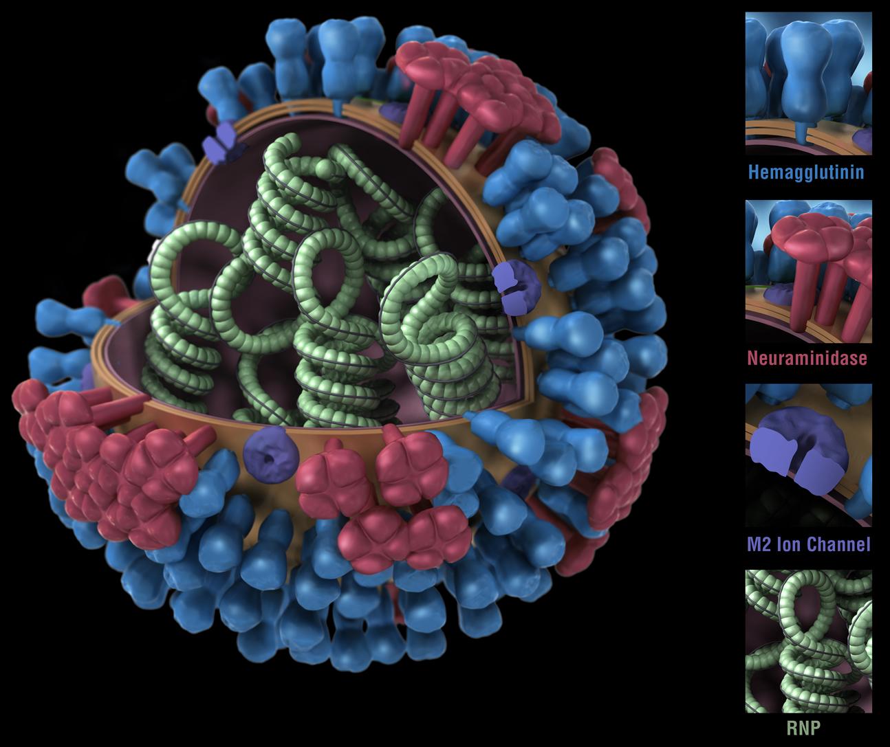 can you reverse flu vaccine