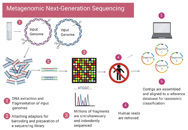 Workflow for metagenomic next-generation sequencing. (1) Genomic DNA is extracted and fragmented. (2) Adaptors are attached for barcoding and library sequencing preparation. (3) The fragments of DNA a