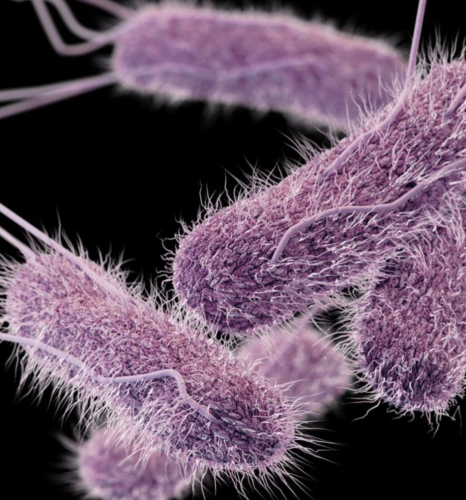 CDC rendering of Salmonella