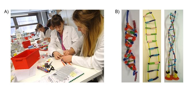 Impressions of the modeling phase: A) Students working on their models. B) Examples for elaborated DNA-models.